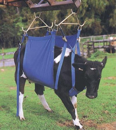 Nostovaljaat lehmän nostamiseen - Nostovaljaat lehmän nostamiseen